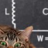 В идеальном колебательном контуре амплитуда колебаний силы тока